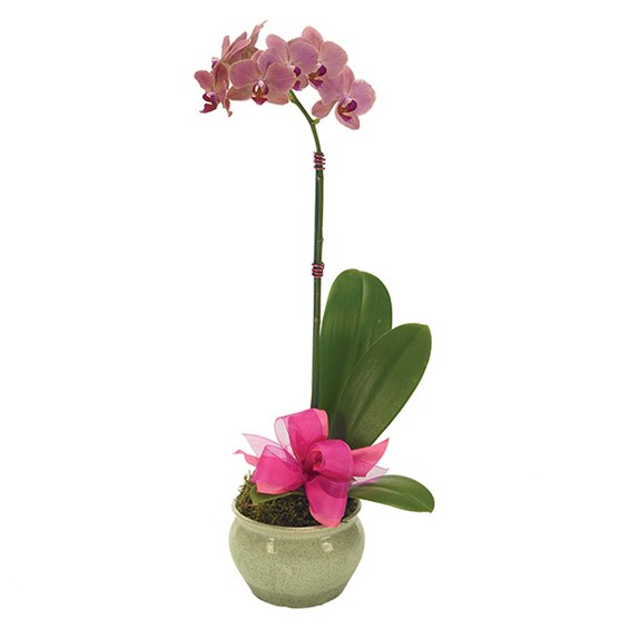 Opulent Orchid for Mom (BF156-11KM)